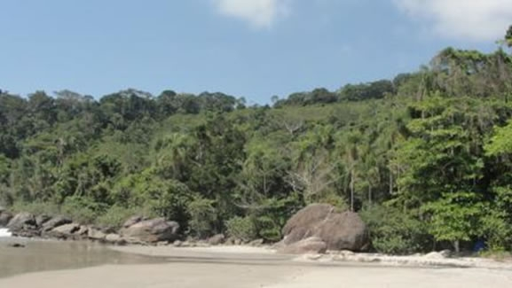 Figura 22. Outra vista da área de Floresta Ombrófila Densa de Encosta com mancha de supressão.
